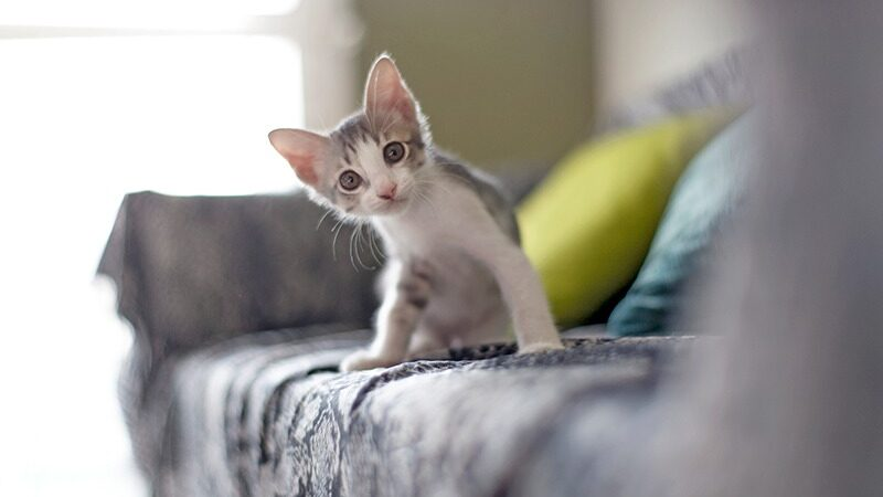 Cat-Care Knowledge That Will Assist All Cat Owners